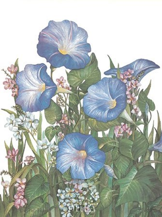 Morning Glories by Dru Bell Byers art print