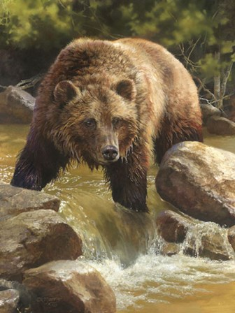 Grizzly at Roaring Creek by Bonnie Marris art print