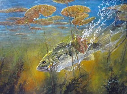 Caught Bass by Carol Decker art print