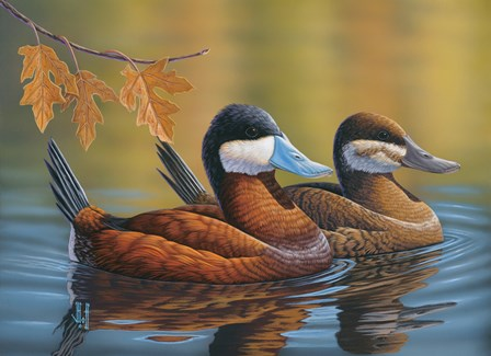 Stiff Tails Ruddy Ducks by Jeffrey Hoff art print