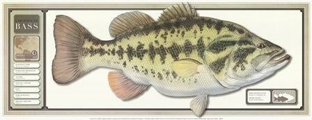 World Record Largemouth Bass art print