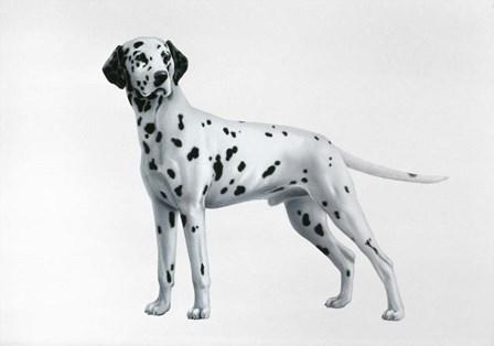 Dalmatian by Harro Maass art print