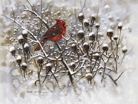 Cardinal by Art Brands art print