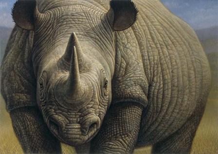 Rhinos by Dan Craig art print