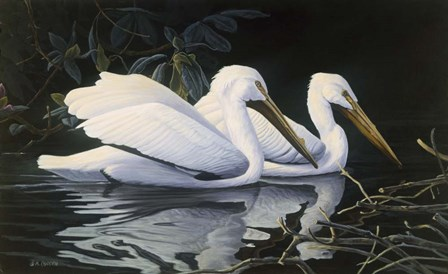 Pelicans by Michael Budden art print