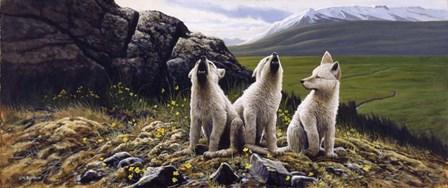 Three Wolves by Michael Budden art print