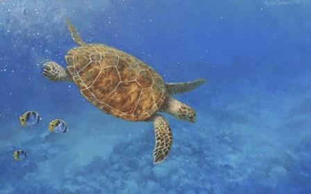 Sea Turtle by Michael Jackson art print
